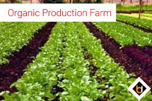 Organic Production Farm