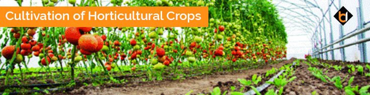 Cultivation of Horticultural Crops