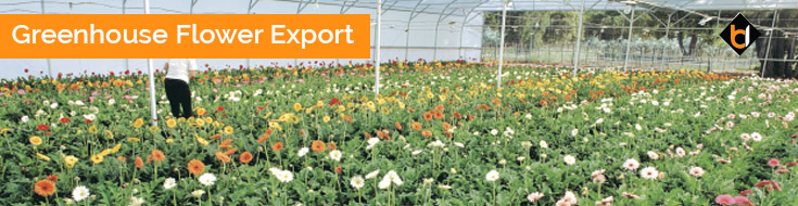 Greenhouse Flower Export