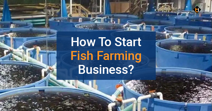 How To Start Fish Farming Business?