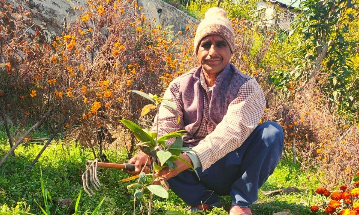 planting trees